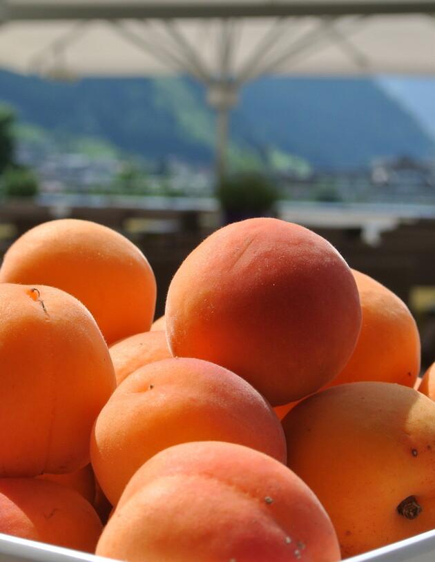Frische Marillen (Aprikosen)