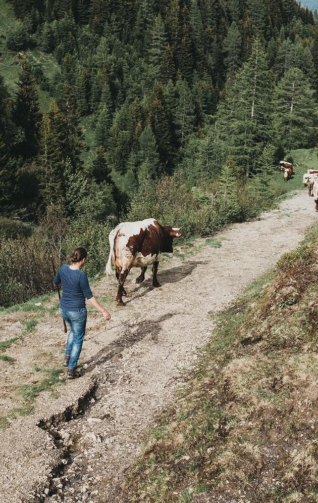 Bäuerin beim Viehtrieb auf der Alm im Großarltal, Salzburger Land.
