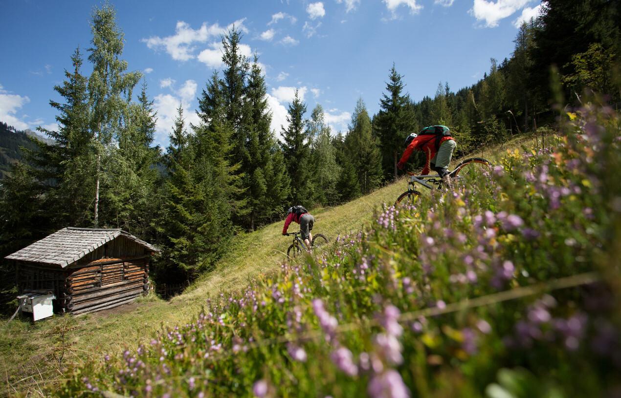 Zwei Mountainbiker beim Downhill fahren über eine Alm in Großarl, Salzburg.